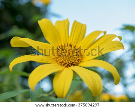Yellow Flower in blur background 3