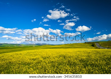 Yellow flower in the fields