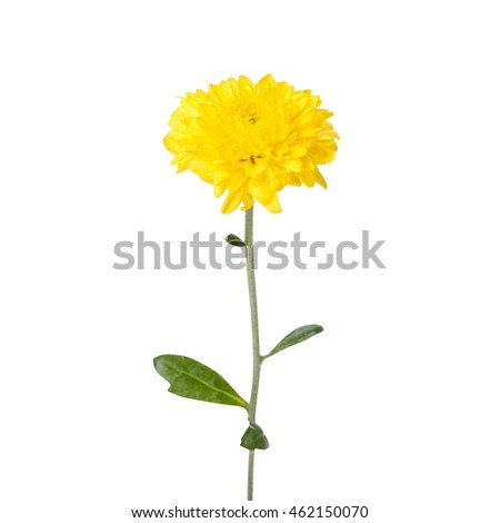 Yellow flower isolated on white background. This has clipping path.