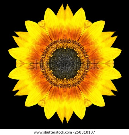 Yellow Flower Mandala. Kaleidoscopic design Isolated on Black Background. Mirrored pattern