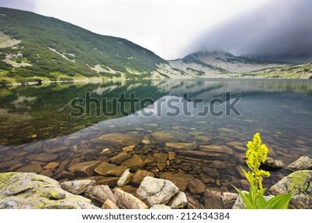 yellow flower near lake - stock photo