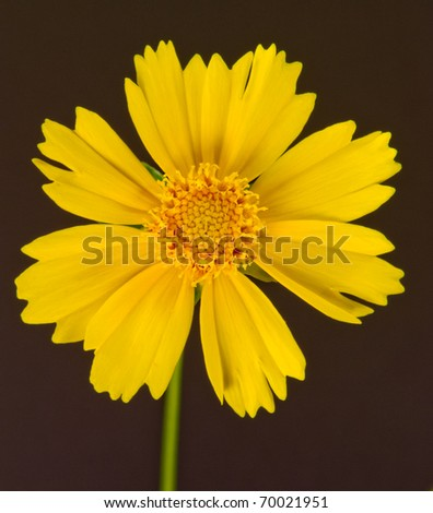 Yellow flower on black background