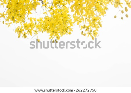 yellow flower  on white background - stock photo