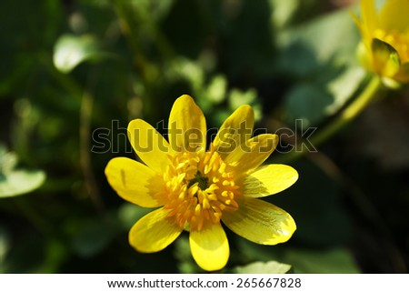 Yellow flower, outdoors, closeup - stock photo