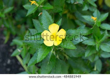 Yellow flower 5 petals stock photo download now 484881949 yellow flower 5 petals mightylinksfo Image collections
