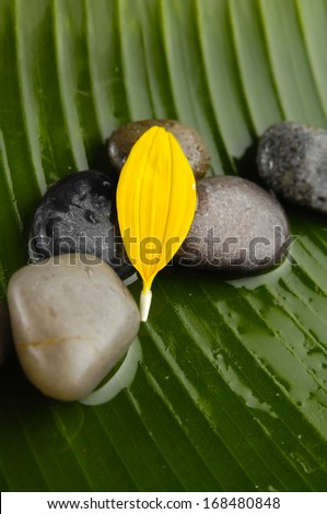 Yellow flower petals and stones on wet banana leaf