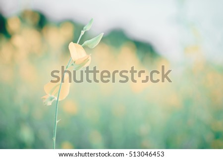 yellow flower with blurred background, soft focus and blurred background