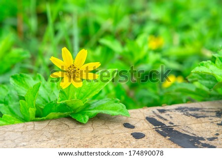 Yellow flower with green leaves. Soft focus, selective focus, and shallow depth of field (DOF) - stock photo