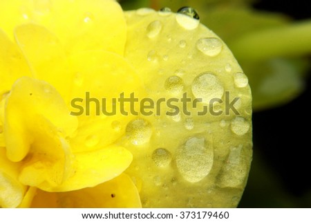 Yellow flower with water drops. Macro - stock photo