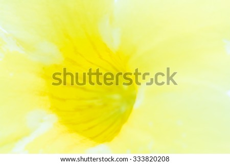 Yellow flowering plant. In a soft blur to use as background.