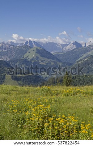Yellow Flowering summer meadow in front of the peaks of the Karwendel Mountains