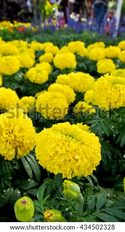 Yellow Flowers and  Blue Flowers backdrop - stock photo