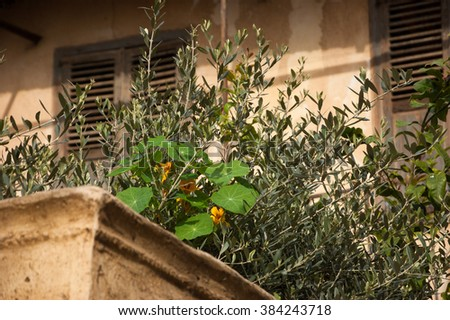 Yellow flowers and plants on the balcony of old house. Tel Aviv (Israel). Selective focus on the plants.  - stock photo