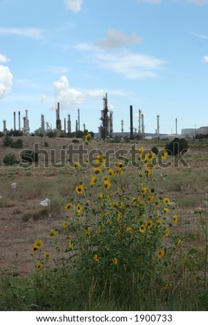 yellow flowers and power plant in the background