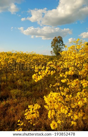 yellow flowers and trees - stock photo