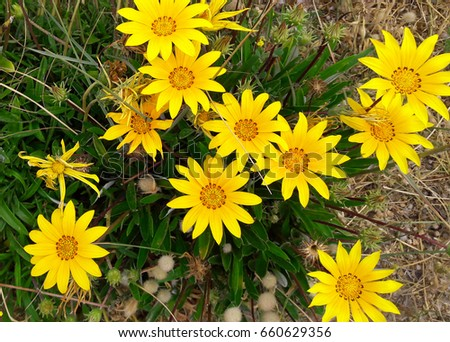 Yellow flowers background stock photo 100 legal protection yellow flowers background mightylinksfo