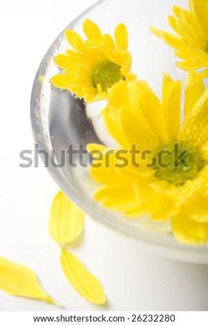 yellow flowers close up floating in water