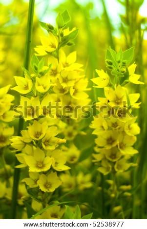 Yellow flowers closeup - stock photo