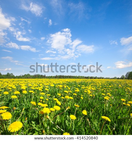 Yellow flowers field under blue cloudy sky