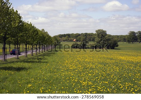 Yellow flowers field under blue cloudy sky and an avenue in Denmark - stock photo
