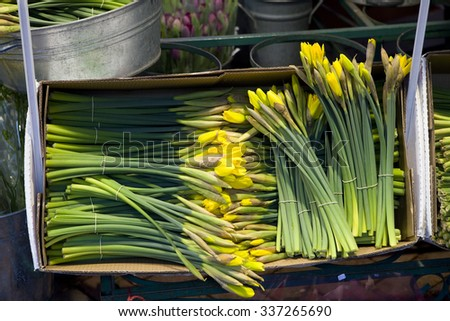 yellow flowers. Flower`s shop. Daffodil. Spring time  - stock photo