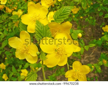 yellow flowers in a garden, north china - stock photo