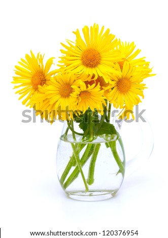 yellow flowers in a pitcher isolated on white background - stock photo