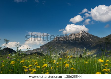 yellow flowers in front of huge mountain in tyrol - stock photo