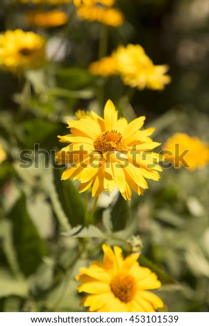 Yellow flowers garden green background nature stock photo safe to yellow flowers in garden green background nature amazing petals leaves mightylinksfo