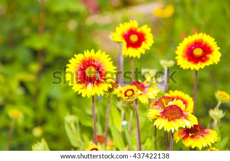 yellow flowers in garden,yellow flower,bee on flower,yellow petals,gardens,green,amazing flowers,yellow petals,bees,flower,long yellow petals,yellow flowers garden,long yellow flowers,floral,orange - stock photo