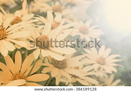 yellow flowers in nature with the effect of aging - stock photo