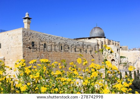 yellow flowers in the archaeological park near the ancient walls of the great Jerusalem, Israel - stock photo