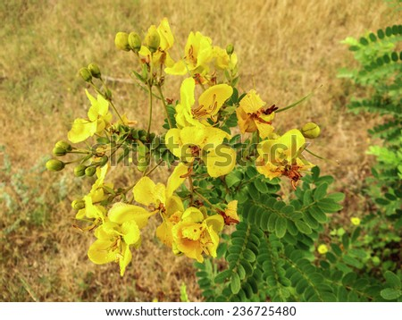 Yellow flowers india stock photo edit now 236725480 shutterstock yellow flowers india mightylinksfo