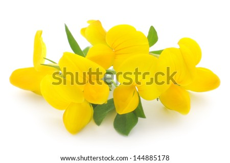 yellow flowers isolated on a white background - stock photo