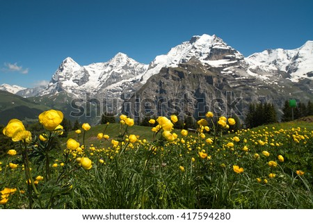 Yellow flowers on a background of snow-capped mountains and blue sky