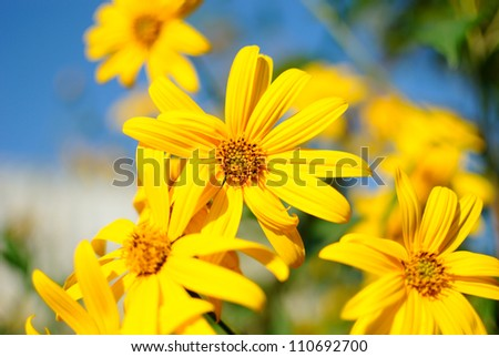yellow flowers on a bed - stock photo