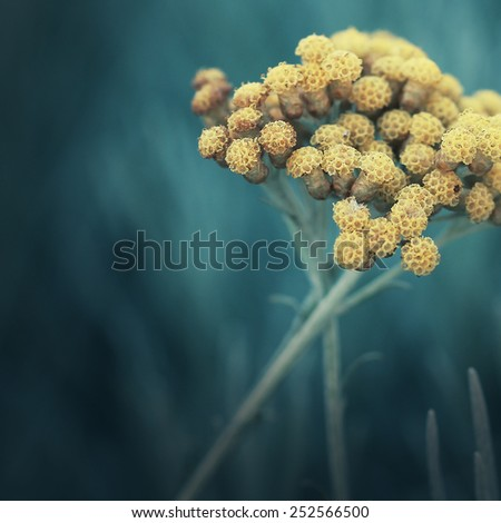 yellow flowers on dark green background - stock photo