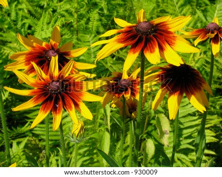 Yellow flowers on fern background