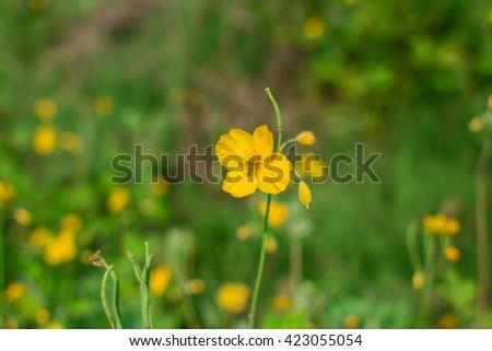 Yellow flowers on field - stock photo