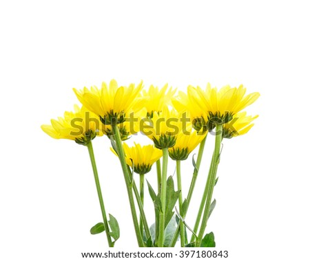 Yellow flowers on white background.