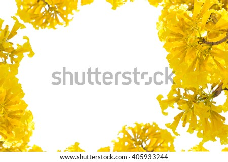 Yellow flowers  on white background for insert text.  frame of yellow flowers. - stock photo