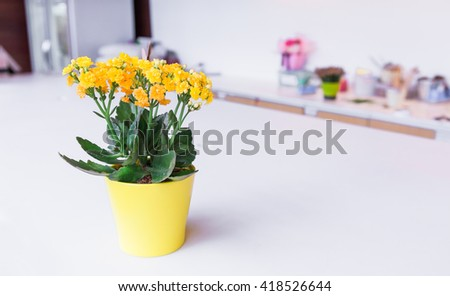 Yellow flowers planted in pots isolated on white background. - stock photo