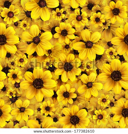 Yellow flowers seamless background pattern. High resolution  - stock photo