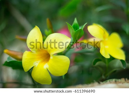 Yellow flowers thin petals stock photo royalty free 611396690 yellow flowers thin petals mightylinksfo