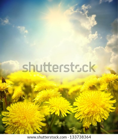 Yellow flowers under sky - stock photo