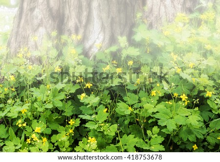 yellow flowers under the tree in misty morning - stock photo