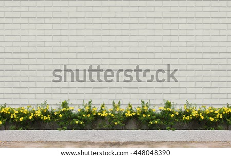 yellow flowers with green leaves at white concrete wall at walk way : exterior and background concept