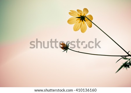 Yellow flowers with   pastel  textured background, soft focus and delicate, text space concept - stock photo