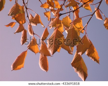Yellow foliage - stock photo