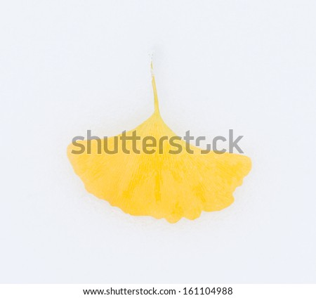 Yellow ginkgo leaves on the snow. - stock photo